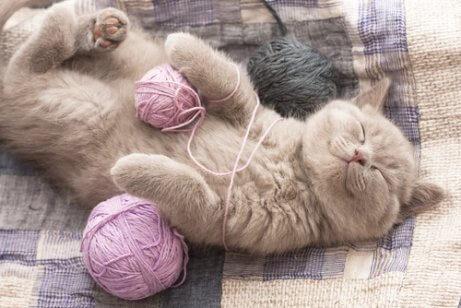 ip yumağıyla oynayan mutlu kedi