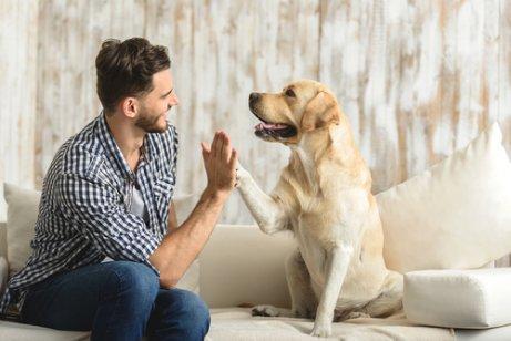 köpek ile selamlaşma