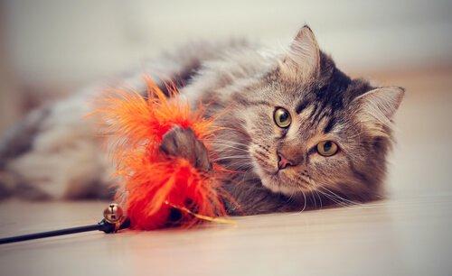 oyuncakla oynayan kedi