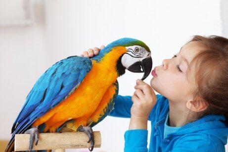 papağan ile oynayan çocuk