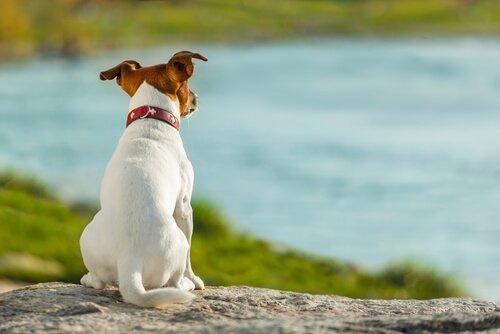 uzaklara bakan köpek