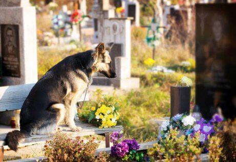 sahibinin mezarında bekleyen köpek