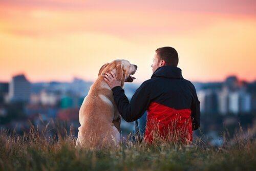 Sadık Köpekler: 5 İnanılmaz Hikaye