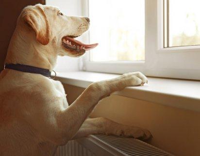 pencerede bekleyen köpek