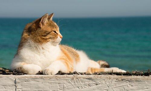 Yazın Kedinizi Serinletmenin Yolları