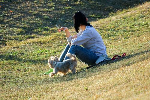 sigara dumanının köpekler üzerindeki etkisi
