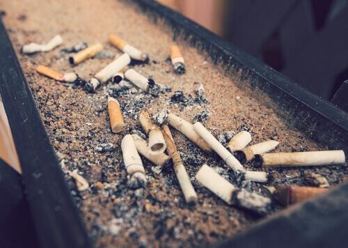 Sigara Dumanı Evcil Hayvanları Ne Kadar Etkiler?