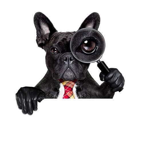 Köpeklerle İlgili İlginç Bilimsel Açıklamalar