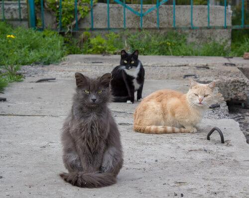 sokak kedilerini sahiplendirme