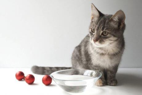 su kabı ve yavru kedi