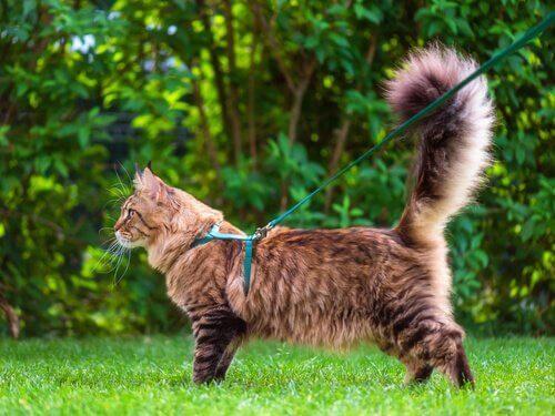 Kedilerin Kuyrukları Bize Ne Anlatır?