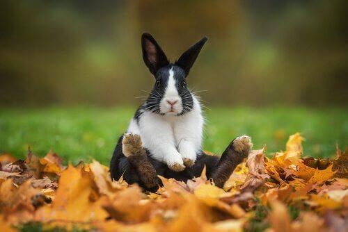 Tavşanlar İçin Eğlenceli ve Orijinal İsimler