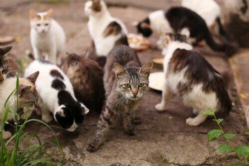 terk edilmiş kediler için barınak