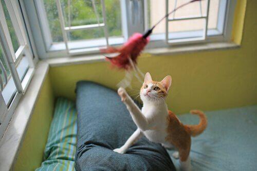 tüylü oyuncakla oynayan kedi