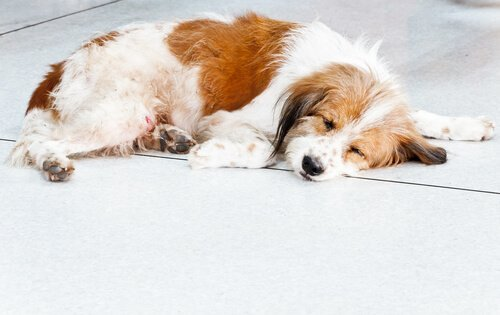 yere yığılmış köpek