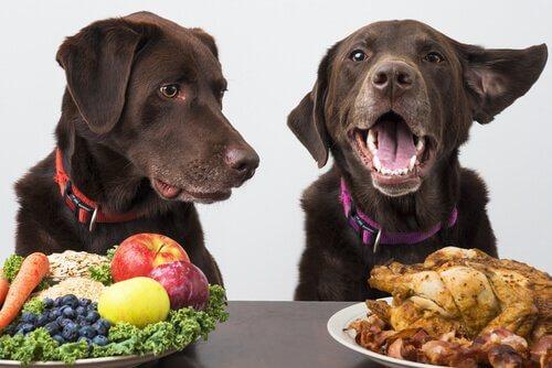 Vegan Köpekler: Köpekler Vegan Olur mu?