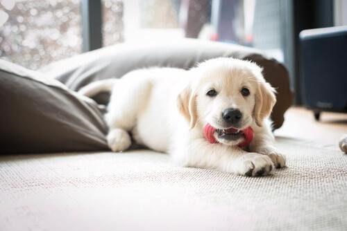 yavru köpekler ve oyuncaklar