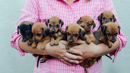 yavru köpekler