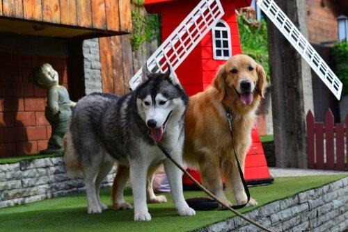 yeni köpek cinsleri örnekleri