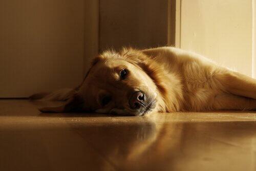dinlenen köpek