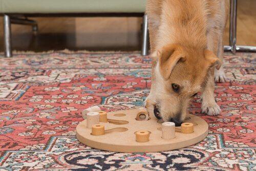 zeka testi uygulanan köpek