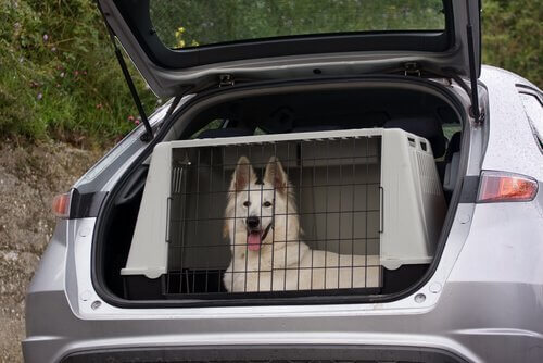 arabada kafeste oturan köpek