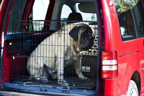 arabada kafeste köpek