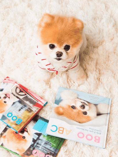instagram köpek hesapları