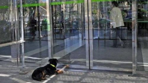 hastanede sahibini bekleyen köpek