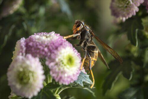 çiçeğe konmuş eşek arısı