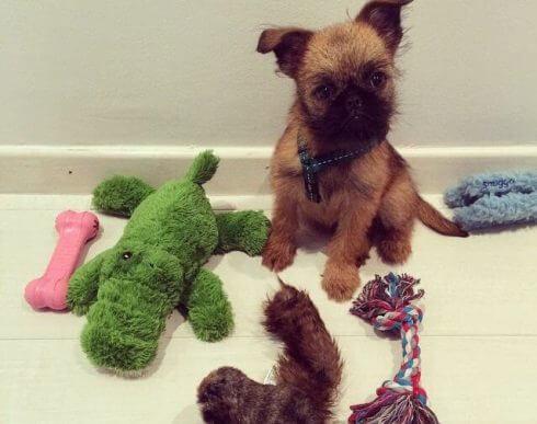 oyuncaklar ve köpek