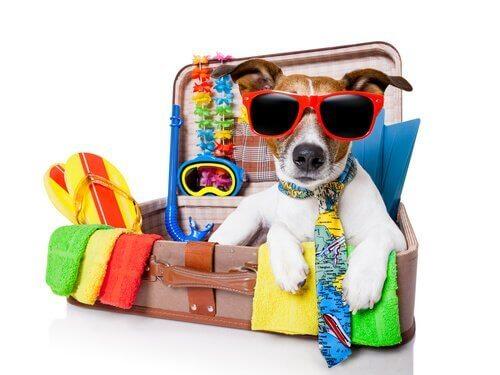 valizin içindeki köpek
