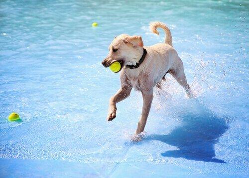 Köpekler için Özel İki Su Parkı