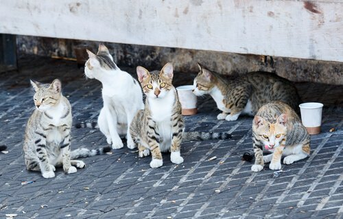 Hayvan Bakım Enstitüsü Mexico City'de Kuruluyor
