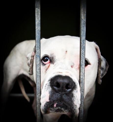 hayvan istismarı vakaları