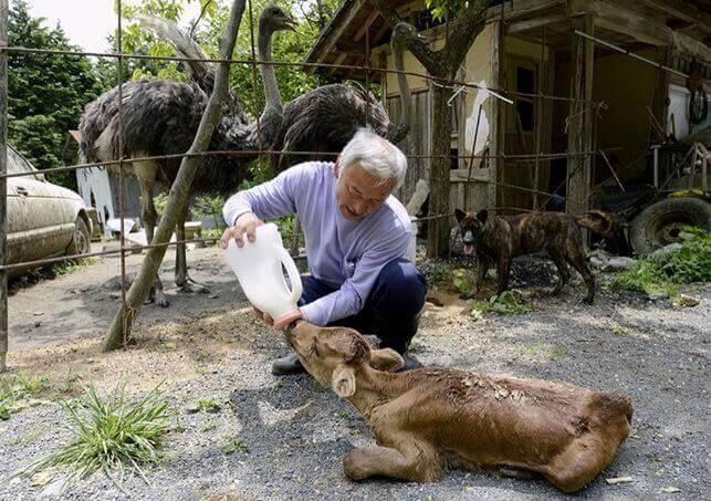 hayvanların koruyucusu ceylan besliyor