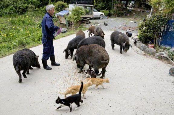 Fukushima'daki Hayvanların Koruyucusu