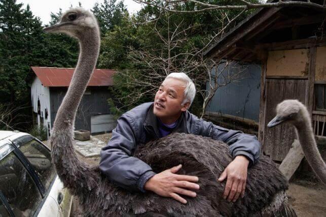 hayvanların koruyucusu ve deve kuşu