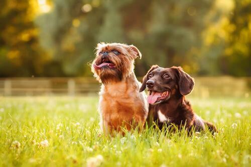 oturan iki köpek