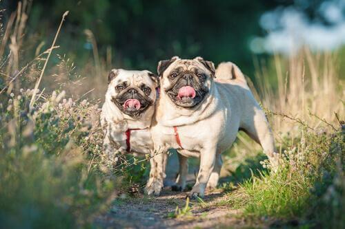 iki köpek yan yana