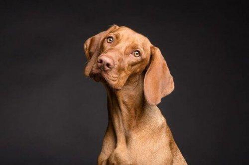 Beslenme Şekli Köpeğinizin Cildini Nasıl Etkiler?