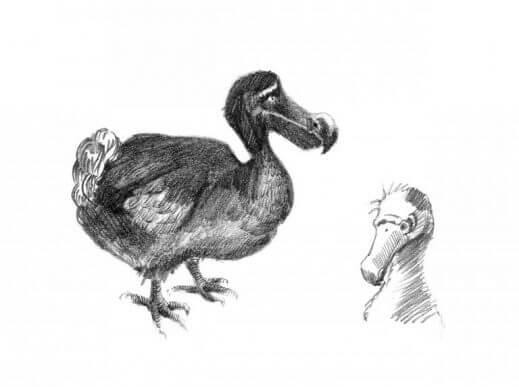 kara kalem dodo kuşu çizimi