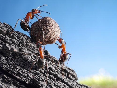 Karıncalar Hakkında Bazı İlginç Bilgiler