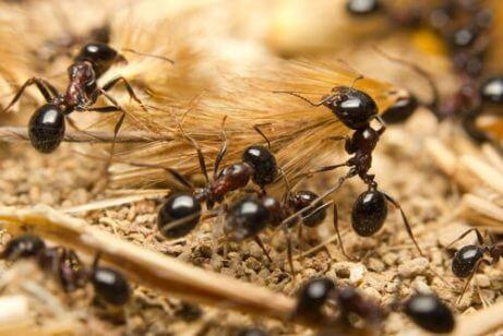 karıncalar hakkında ilginç gerçekler