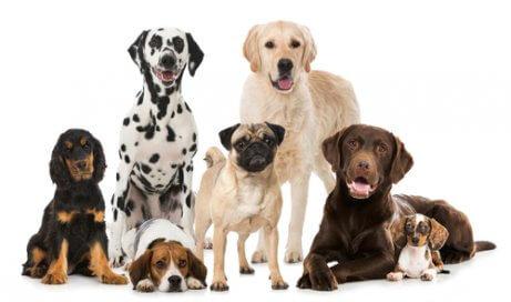 farklı cinste köpekler