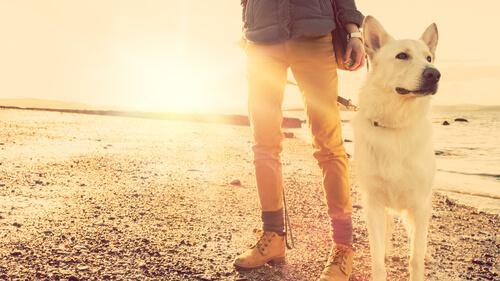 Hayvanınızdan Ayrılmakta Sıkıntı mı Yaşıyorsunuz?