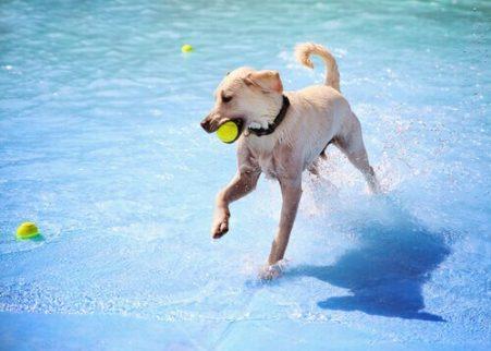ağzında top havuz kenarındaki köpek