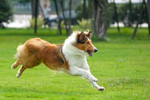 bahçede koşan köpek