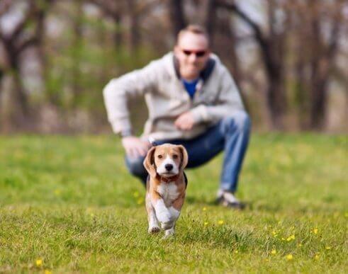 Yürüyüş Sırasında Köpeğinizi Kaybetmemek için