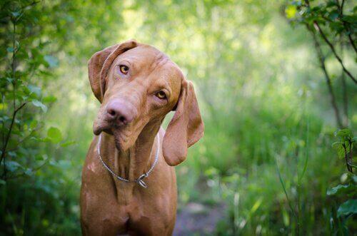 Köpeğinizin Kan Grubunu Bilmek Çok Önemli!